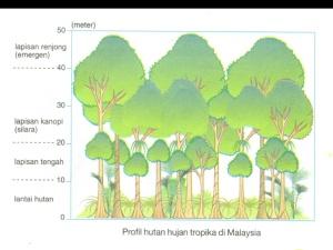 image hutan